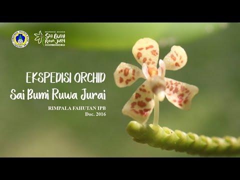 Rimpala: Ekspedisi Orchid Sai Bumi Ruwa Jurai