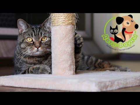 Как кашляет кошка