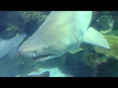 Random Shark