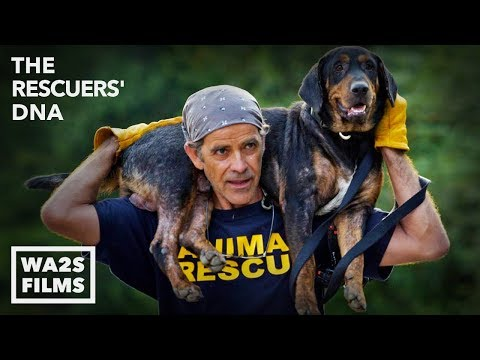 Best Friends With Hope For Paws Rescue Dogs & Kittens After Hurricane
