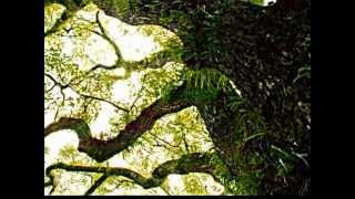 熱田神宮会館イメージCMソング http://youtu.be/PJz-G8tbNMo 『森は生き...