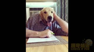 讓你笑翻的寵物影片 funny dog 2018