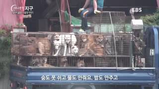 Dog meat trade in Asia