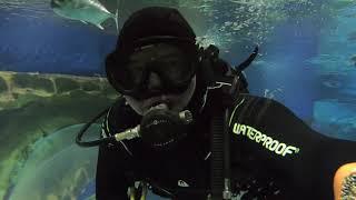 Oceanarium, Saint Petersburg, Russia 2021