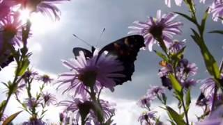 Видео ролик Сохраним природу детям(, 2013-01-09T12:23:45.000Z)