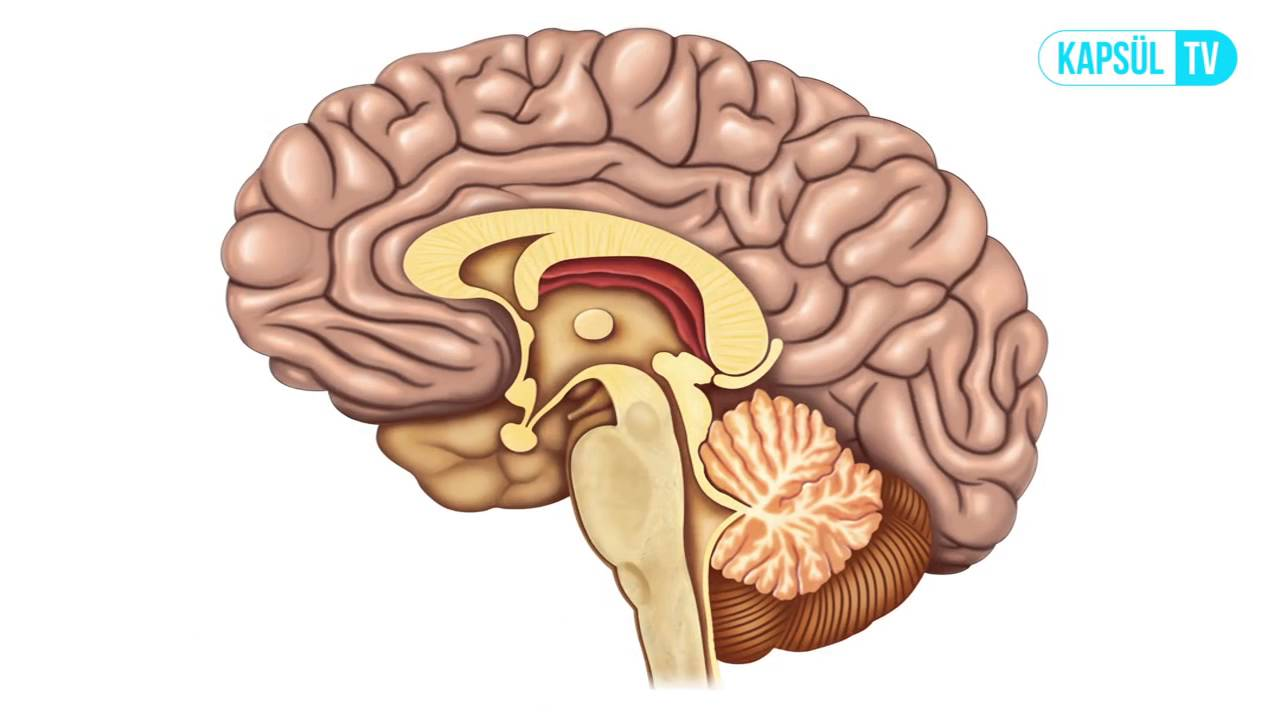 Dandy Walker Sendromu nedir Belirtileri neler