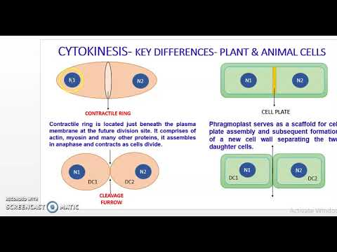 Cytokinesis in plant & animal cells & Mitotic Significance ...