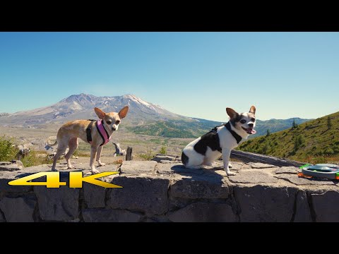 Mount St. Helens National Volcanic Monument 4K Virtual Hike