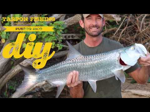 Tarpon Fishing Puerto Rico DIY