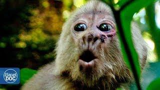 Huaorani: Amazon Tribe. Full Documentary