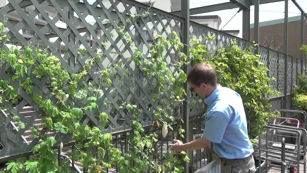 Karela Plant Care