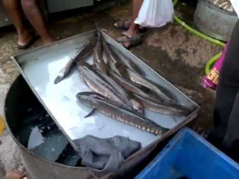 Image result for puthur fish market trichy