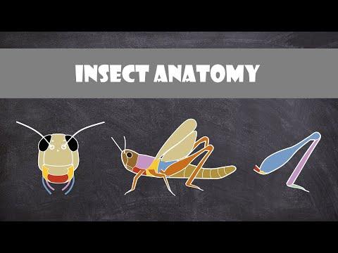 Insect Anatomy | Entomology