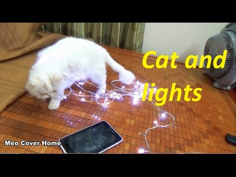 My Cat Crazy With Christmas Lights  | Merry Christmas 2016