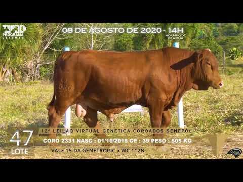 LOTE 47 CORO 2331