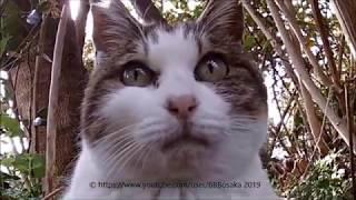植え込みに猫が生えてた(笑)7