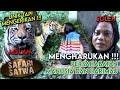 Terharu  Mulan   Soleh  Kisah Persahabatan Harimau dan Manusia Dari Indonesia   SAFARI SATWA  25 1