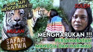 Terharu! Mulan & Soleh, Kisah Persahabatan Harimau dan Manusia Dari Indonesia - SAFARI SATWA (25/1)