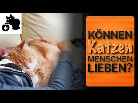 k nnen katzen menschen lieben liebt meine katze mich wenn ja wie zeigen katzen ihre zuneigung. Black Bedroom Furniture Sets. Home Design Ideas