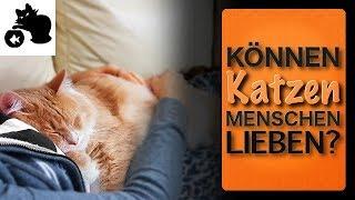 🔥Können Katzen Menschen lieben? Liebt meine Katze mich? Wenn ja, wie zeigen Katzen ihre Zuneigung?