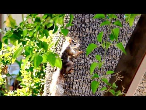 Squirrel In La Marina Park, Alicante, Spain