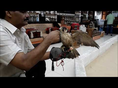 The Falcon Market in Doha Qatar