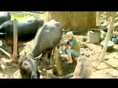 bhaisi palera-bishnu majhi.mp4