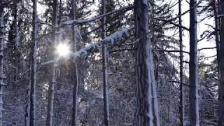 Snowy Winter Forest (Ultra HD - 4K) - Classical Music (Morning Mood)