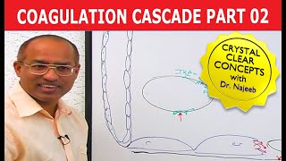Coagulation Cascade 2/12