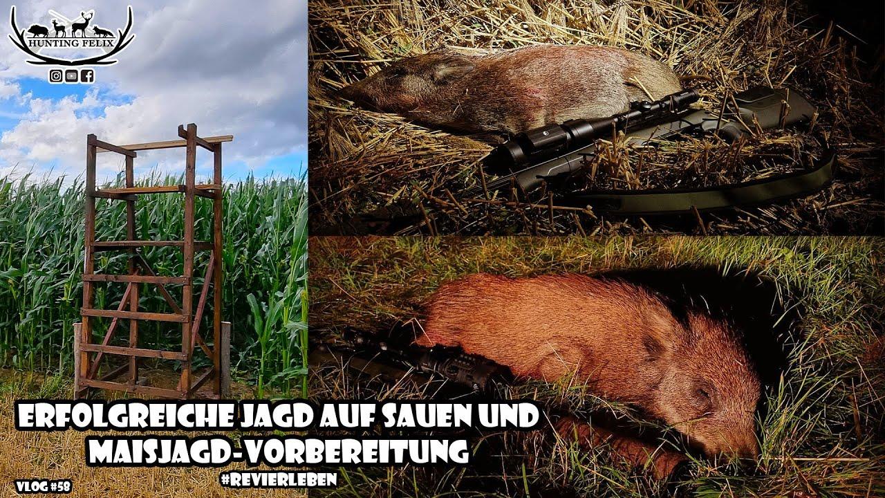 Download erfolgreiche Jagd auf Sauen und Maisjagd-Vorbereitung / RevierLeben // Vlog 58