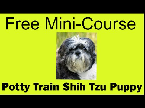 Free Dog Potty Training Videos