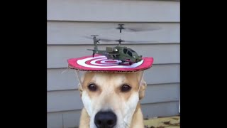 Helicopter takes off from top of dog