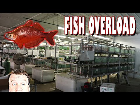 Tour Of Largest Tropical Fish Wholesaler In Texas Part 2