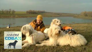 Южнорусская овчарка. Планета собак 🌏 Моя Планета