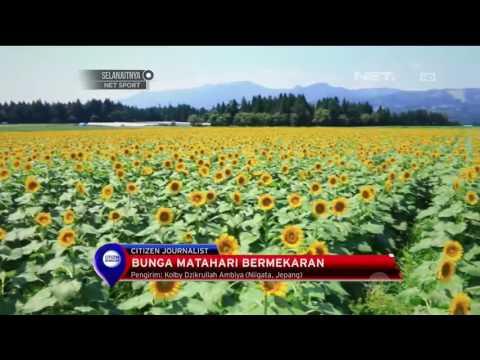Sambut Musim Panas Di Jepang - NET12