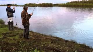 Сургут рыбалка Обь Август 2015г..