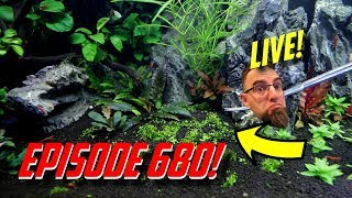 Episode 680! Working on the 150 gallon red cherry shrimp tank setup! thumbnail
