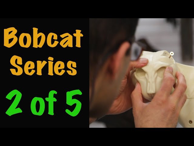 Bobcat Taxidermy Series. Part 2....EAR LINERS,  FORM ASSEMBLY . Art of Taxidermy.