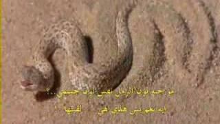rattlesnake ravi