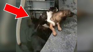 Los casos más increíbles de animales mostrando bondad y ayuda