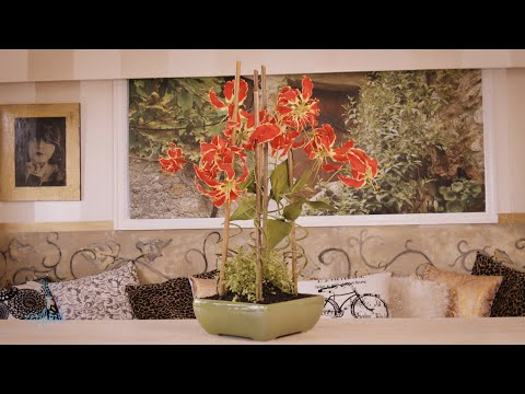 Floristry Design Tutorial: Orange Gloriosa Lilies with Baby Tears thumbnail