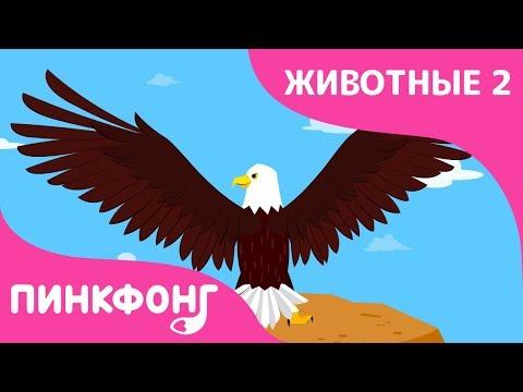 Орёл — Стремительный Орёл | Песни про Животных | Пинкфонг Песни для Детей