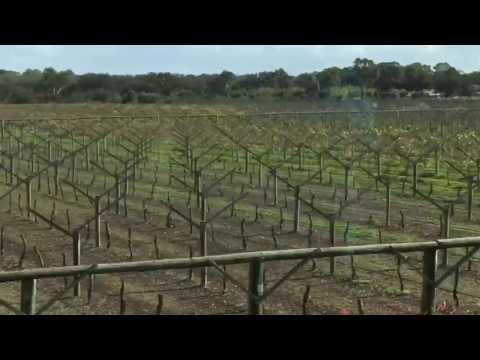 Swan Valley Wine, Beer, Cheese and Chocolate Tasting! Perth, Australia