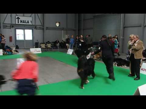 MVP Prague Expo Dog 16.4.2017 - BOB