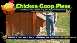 Chicken Coops Plans Free - Chicken Hen Houses