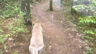 Sloughi walk in Raisin Woods