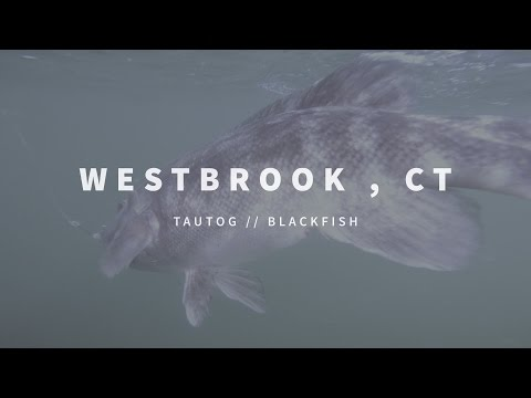 New England Fishing // Westbrook, CT // Episode 106
