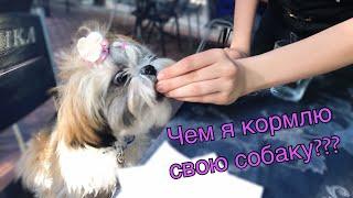 Чем кормить собаку ши-тцу ? // Какой корм выбрать???