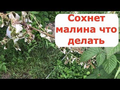 Татьяна васильева болеет