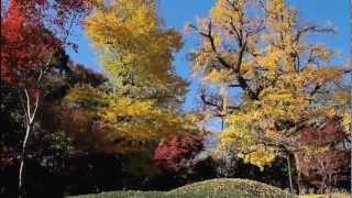 紅葉と黄葉の九品仏(新版)<東京世田谷 九品仏浄真寺の秋>
